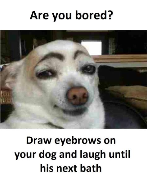 Bored Memes - bored dog meme pictures to pin on pinterest pinsdaddy