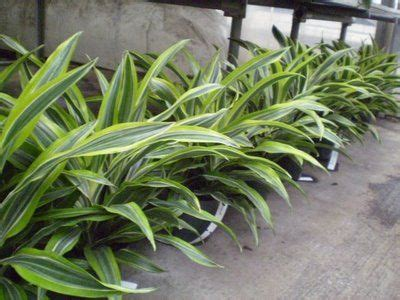 indoor plants indirect sunlight 17 best images about medium light solutions on pinterest