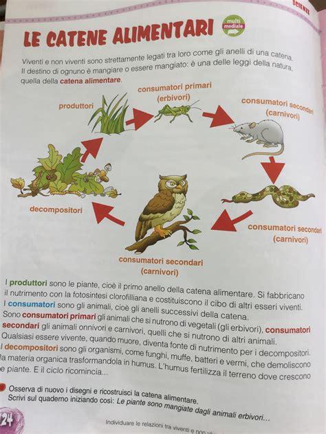 la catena alimentare degli animali la catena alimentare scienze