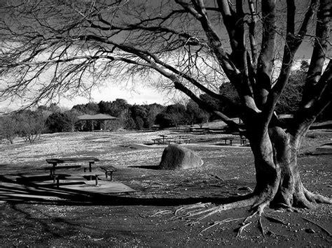 dibujos en blanco y negro sombras acuarelados by de luces y sombras imagenes en blanco y negro taringa