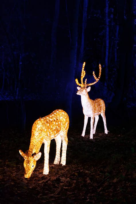 illuminated reindeer free stock photo public domain pictures