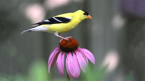 how to your to be a bird plants audubon