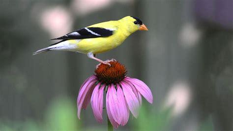 native plants audubon