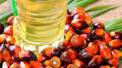 cara membuat minyak kelapa agar tahan lama mau membakar lemak lebih cepat curkan bahan ini ke