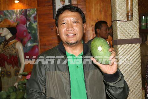 Bibit Mangga Alpukat Pasuruan mangga gadung klonal 21 resmi jadi buah khas kabupaten