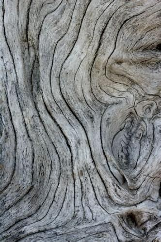 natural pattern pinterest natural wood with grey textures organic forms woodgrain