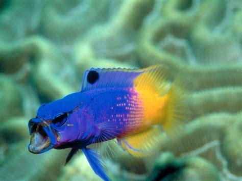 Aquarium Fish L by Fish Images Tropical Fish Hd Wallpaper And Background Photos 5412573