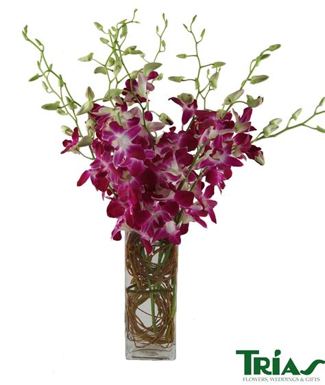 Orchids In A Vase by Dendrobium Orchids Square Vase Trias Flowers Miami Fl