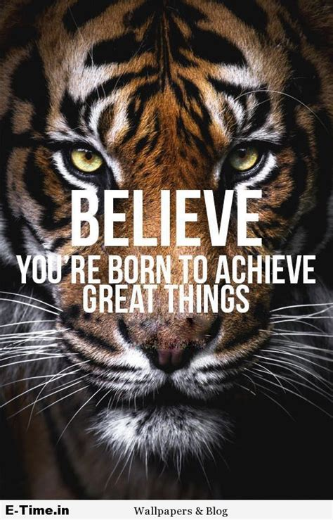 top 25 ideas about tiger on white tiger quotes www pixshark images galleries with a