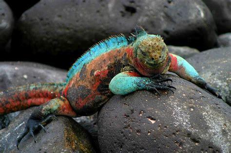 galapagos islands animals galapagos islands darwin inspiration pre tend be curious