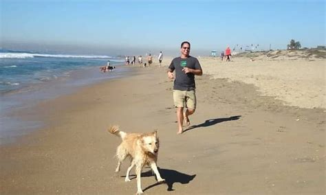 friendly hotels los angeles pet travel pet friendly hotels near los angeles
