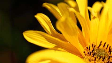 yellow flower wallpapers hd wallpapers id
