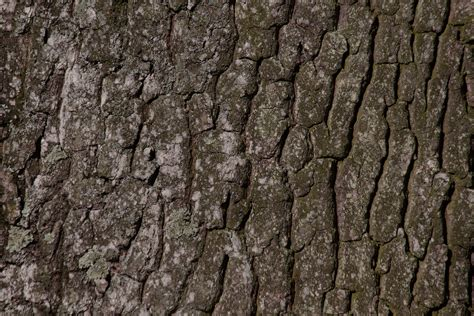 Free Images : tree, nature, branch, wood, texture, leaf