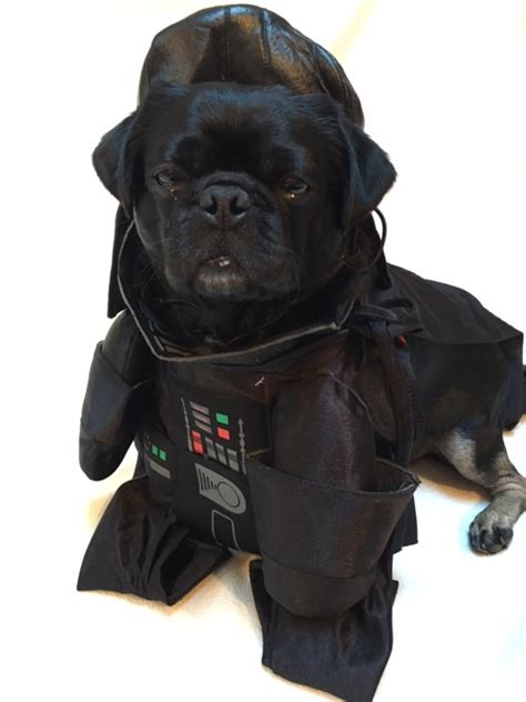 pug darth vader costume costume archives mypugnation