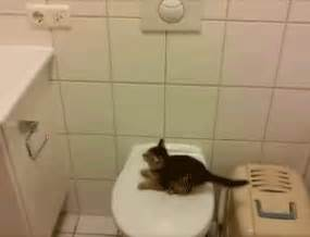 a few cat fail gifs to make your day album on imgur