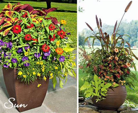 Sun Flowers For Planters by Urning Its Keep Design Finch