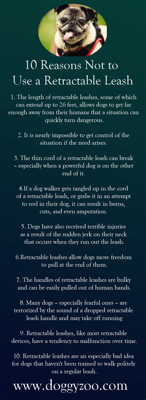 how to a to use a leash 10 reasons not to use a retractable leash doggyzoo comdoggyzoo