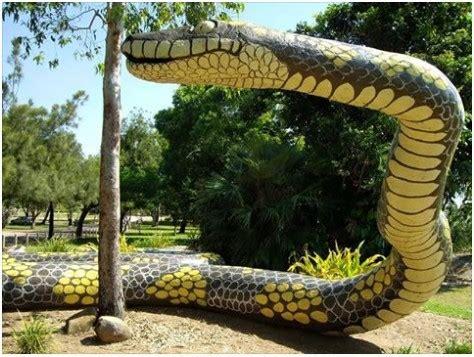 amazing   world biggest snake anaconda  wwwnaijabosscom entertainment nigeria