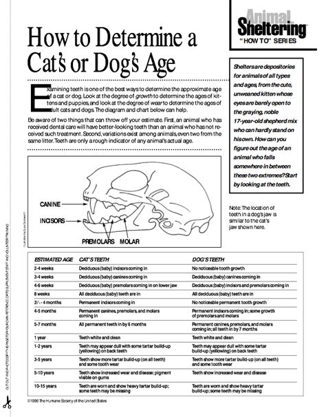 how to determine age how to tell the age of my cat dinzie