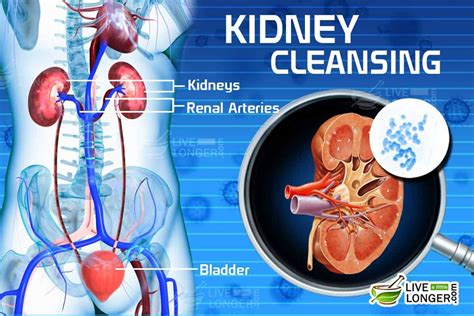Detox Liver And Kidneys Fast by Kidney Cleansing 7 Day Diet Plan For Detox