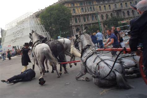 cavalli da carrozza carrozza a cavalli investe due pedoni corriere it