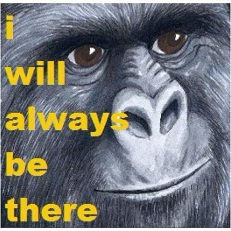 Gorilla Munch Meme - 25 best ideas about jimmies rustled on pinterest