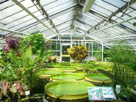 Nursery Plants London by Invernadero