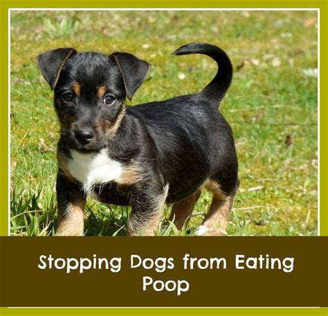 keep dog from pooping in house spray to keep dogs from pooping in house 28 images best pet gadgets raccoon