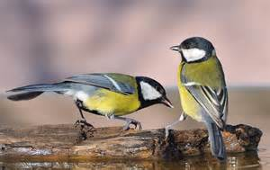 am 233 nager jardin pour les oiseaux en hiver ezoo