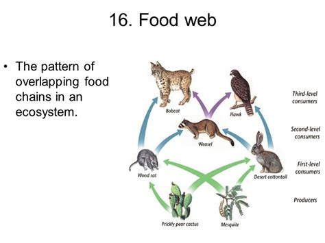 pattern of energy flow within an ecosystem organism response vocab ppt video online download