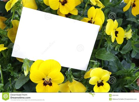 1800flowers Gift Card - gift card and yellow flowers royalty free stock image image 2091606