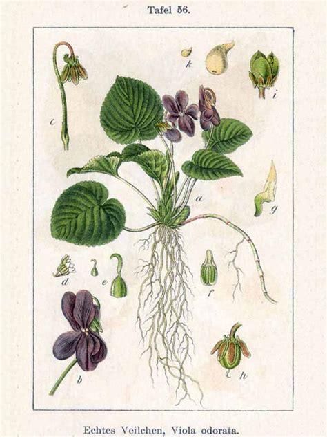 nomi derivano da fiore onomastica verde 1