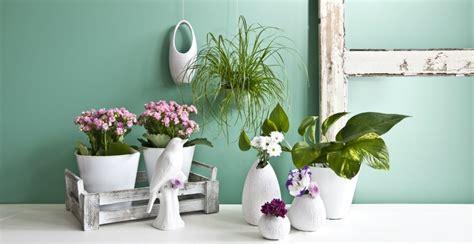 semi di fiori westwing semi di fiori un tocco di poesia alla vostra casa