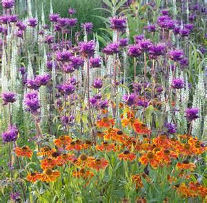 plantes vivaces pour le jardin vivaces couvre sol