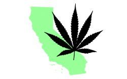 Custom Grow 420 Criminal Record California Legislature Passes Marijuana Decriminalization Bill Pot Tv