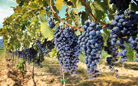 best italian destinations top italian destinations to savour best sips for wine