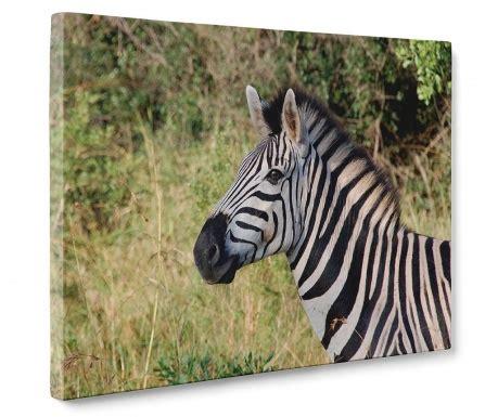 Zebra Waka amintiri din safari vivre