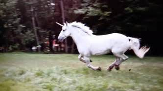 real unicorn caught on tape youtube