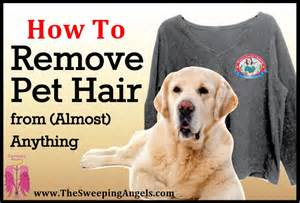 How To Remove Pet Hair From Clothes In The Dryer How To Remove Pet Hair From Almost Everything The
