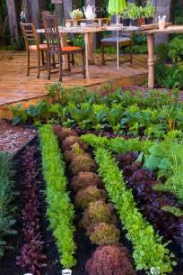 backyard garden ideas vegetables photograph backyard veget