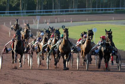 Anact Banca Dati associazione nazionale allevatori cavallo trottatore