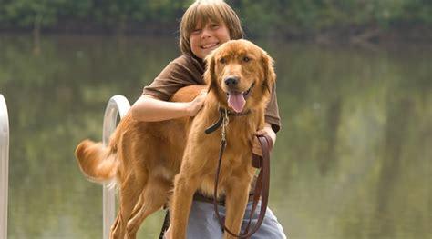 breeds for families top 5 breeds for families with children