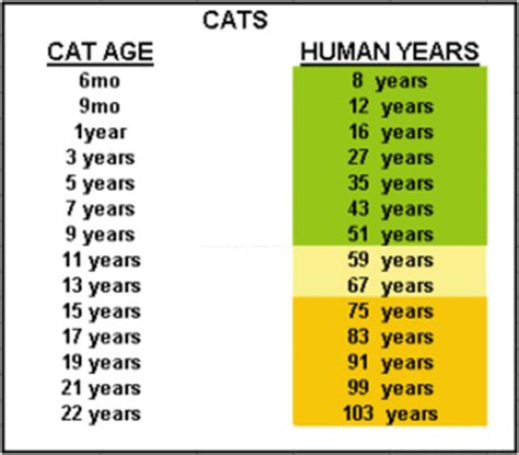 how many years is 1 human year how is your cat in human years the pet product guru