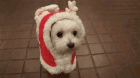 dog gif find share  giphy