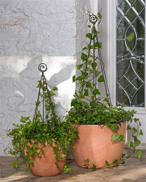 tomato cages sale vegetable trellises and plant supports - Buy Topiary Frames