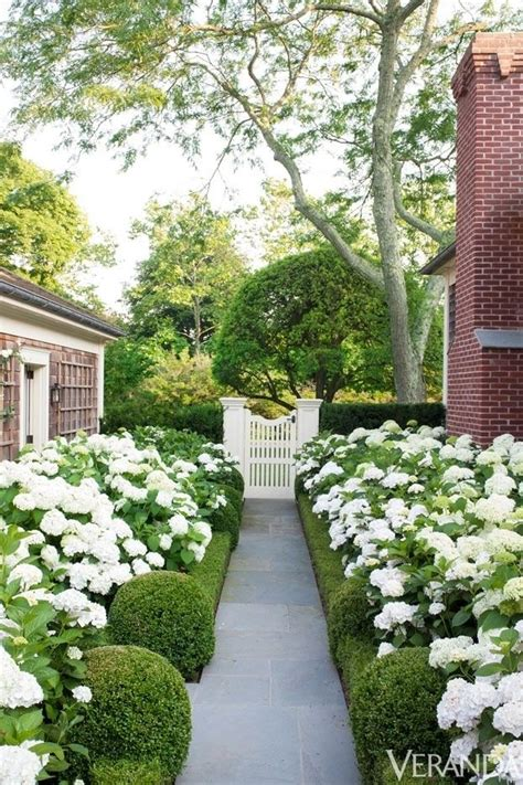 white flowers garden modern country style hydrangeas topiary and boxwood in