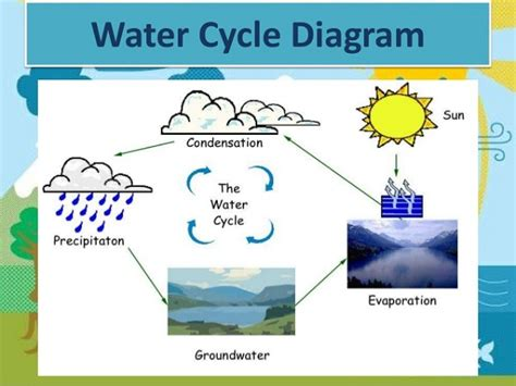 a diagram of the water cycle the water cycle simple diagram www pixshark images