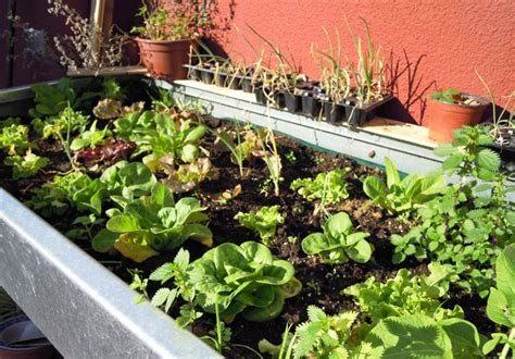 vasi per orto in terrazzo coltivare orto sul balcone orto in balcone realizzare