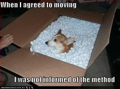 moving a dog to a new house moving to new house quotes quotesgram