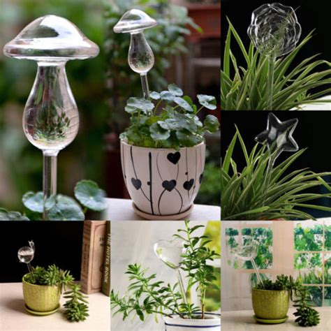 shapes house plants flowers water feeder automatic